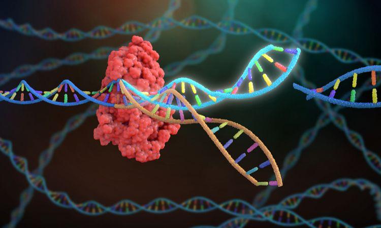 NEDİR BU CRISPR?