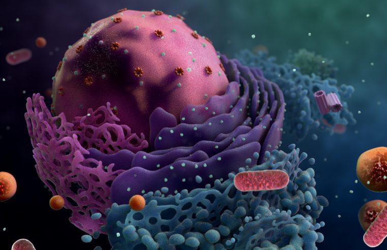 Hayatın birimi: Hücre